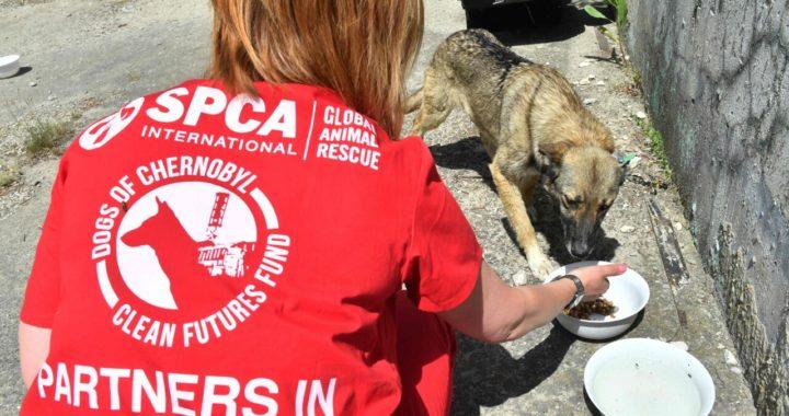 Американский фонд два года спасает собак в чернобыльской зоне отчуждения.